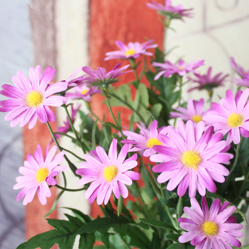 compare prices on small daisy online shopping/buy low price small, Beautiful flower
