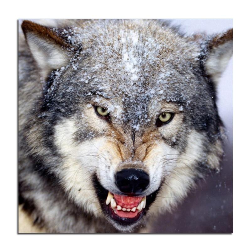 Скачать Обои Волк