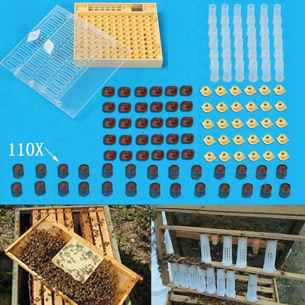 Apiculture Reine D'élevage Cupkit Boîte 110x Brun Cellulaire Tasses Système Cupularve Outils Apiculteur Outils Apiculture Fournisseur