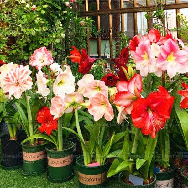 Plantas de flores para interiores luz interior de flores elegantes flor lamptouch planta - Plantas de interior online ...