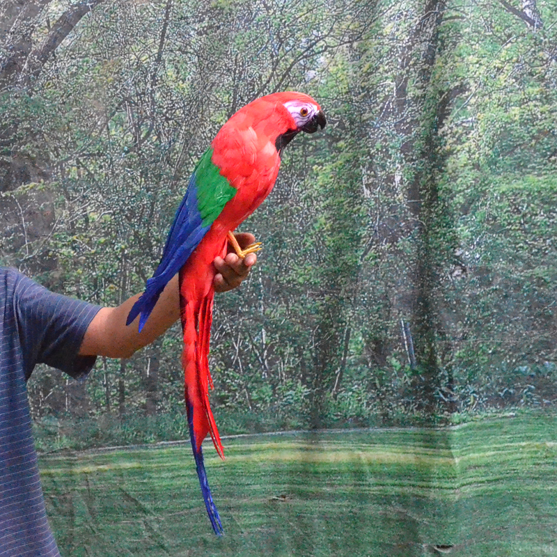 artificial parrot bird foam coloured feathers parrot large 65cm handicraft cosplay garden decoration toy gift a1907