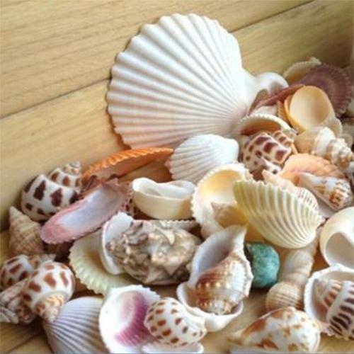 100g/bag Mixed Sea Beach Shells Crafts Seashells Aquarium Decor Photo Props