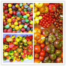 100 PCS 24 KINDS Tomato Seeds Mixed Pack Purple Black Red Yellow Green Cherry Peach Pear seeds vegetables Organic Graden plants