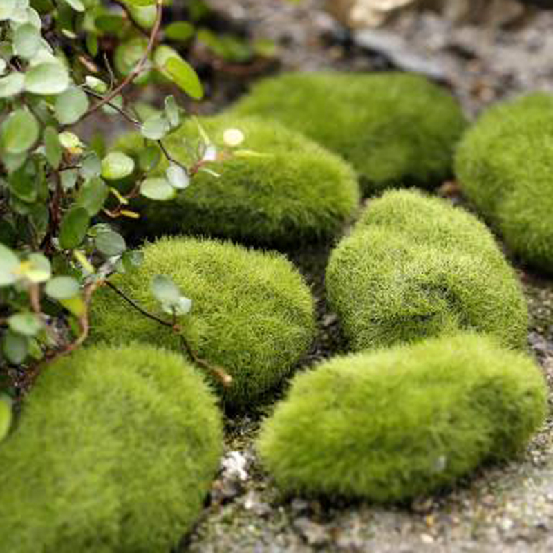 8pcspack green artificial moss stones grass bryophytes home bonsai decoration for garden path decor
