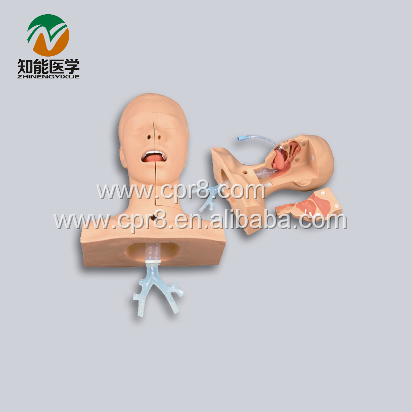 BIX-H85 Advanced Sputum Suction Training Model(Medical Model) WBW408 bix lv10 medical education training