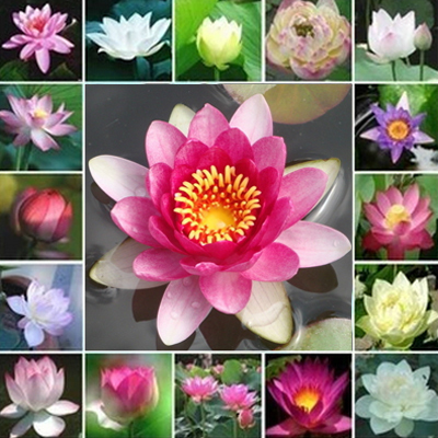 popular lily flower typesbuy cheap lily flower types lots from, Natural flower