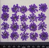 Taro Purple Lace Flower Bulk Packing 1000pcs Dry Flower Press Flower For Candle Decoration Free Shipment