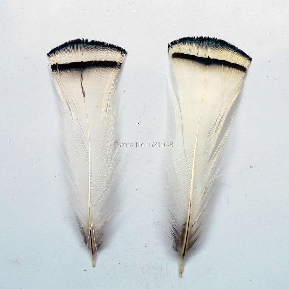 wholesale Scarce 10pcs high quality natural cover chicken feather 4-9cm  variety of decorative White film