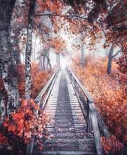 5d diy алмазная живопись кленовые листья Пейзаж Вышивка крестом