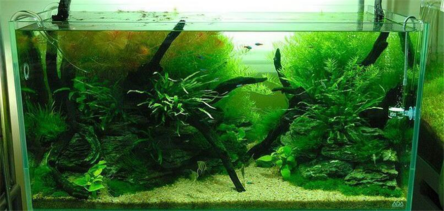 Natural decorations for aquarium for Natural fish tank