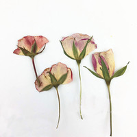 Beautiful Pink Rose Bud Dried Red Flowers DIY Pressed Flowers For Wedding Decoration 60 Pcs Free