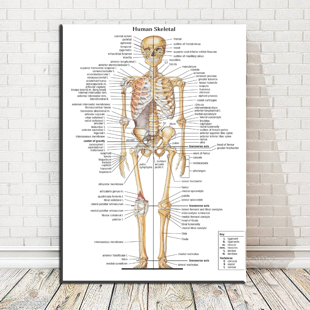 Xr607 Canvas Painting Wall Art Picture Human Skeletal Anatomy Bones