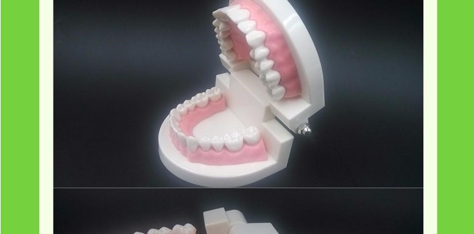 Teeth Model0000011