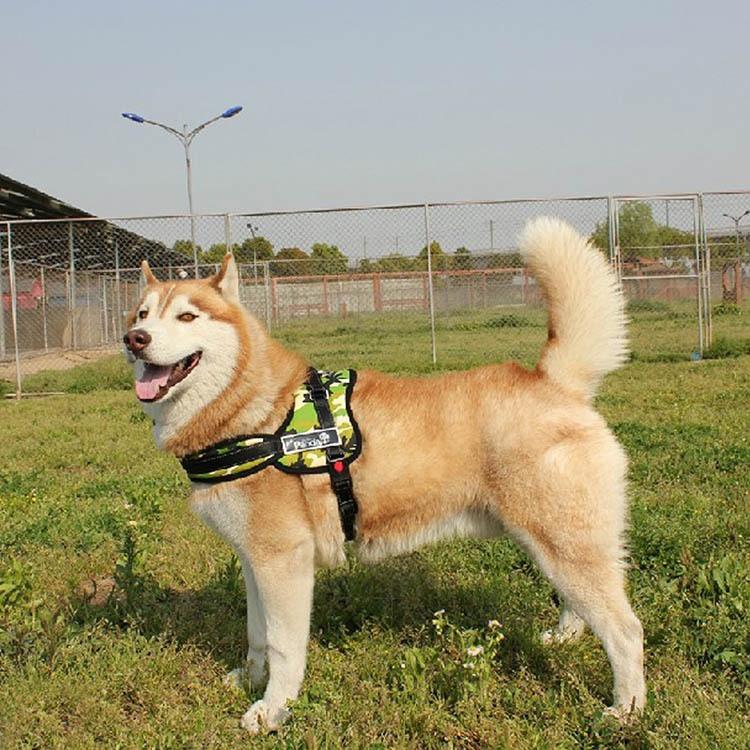 аксессуары для собак для больших собак