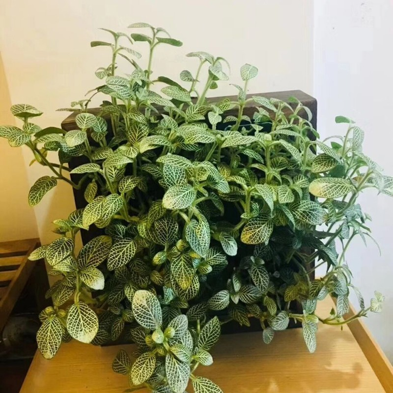 1 шт. Модульный тип Штабелируемый растительный настенный цветочный горшок Вертикальная настенная подвесная зеленая суккуленты цветочный горшок бонсай садовый декоративный