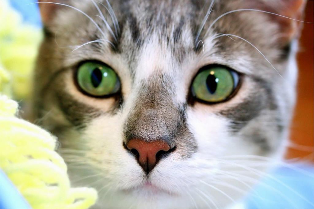 DIY marco ojos verdes gato gatito bebé arte animal carteles y ...