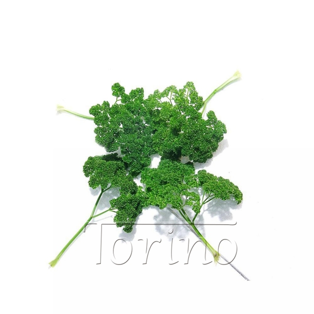 Garden Decoration Bonsai 20 Parsley Seeds Resistance To Pests And Diseases  Vegetable Seeds Original Packaging Garden