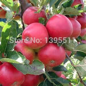 яблоки на алиэкспресс