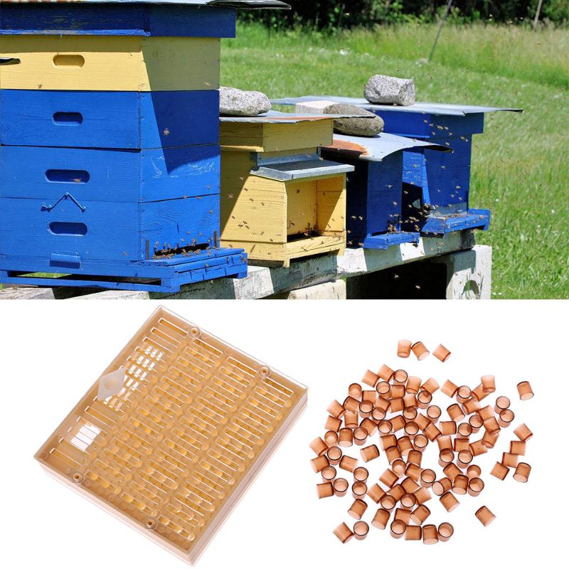 Beekeeping Equipment Queen Rearing Cell Cup Kit Apiculture System BeeKeeper Cultivate Tool Set-in Beekeeping Tools from Home & Garden