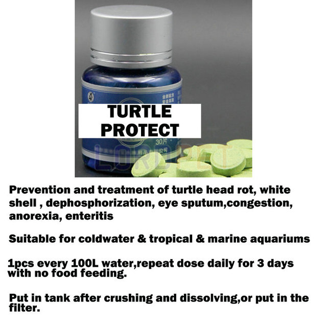 turtle protect