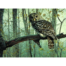 Frameless Picture DIY Painting By Numbers Owl Picture Kits