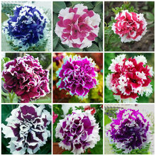 200 pcs rare beautiful petunia flower colorful double petunia plants earsy to grow bonsai tree flower for garden(China)