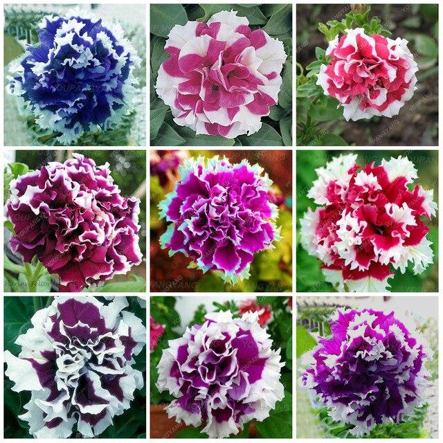 200 шт редкие красивые цветок петунии красочные двойные растения петунии серьги для выращивания бонсай дерево цветок для сада