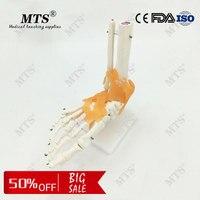 1:1 Human anatomy skeleton Foot joint function skeleton model medical Teaching foot bone model with Ligament traumatic pistol