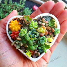 Big Sale!100pcs/bag blue Lithops Seeds Mini Succulent seeds ,Potted Plants Perennial suculentas Cactus seeds Planta Absorb Radia