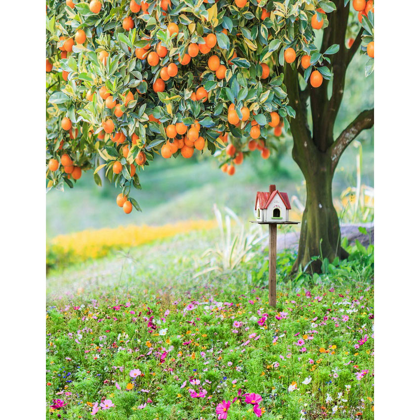 Harvest autumn photo background fotografia orange tree photography backdrops for photo studio props photographic background