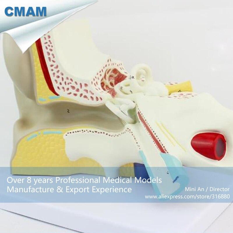 12519 CMAM EAR04 Anatomie Riesigen Menschlichen Ohr, 6 mal voller ...