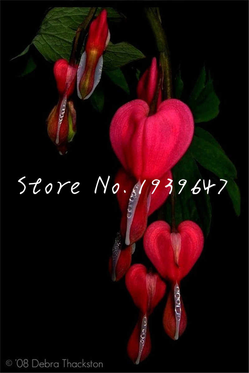 100 Pcs Lily Of The Valley Flower plants Indoor Rare Bell Orchid plants Rich Aroma Bonsai Flowers Cute And Beautiful Plants