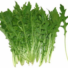 400  Arugula  Seeds ideal DIY Vegetable for Cooking Salad  Free Shipping