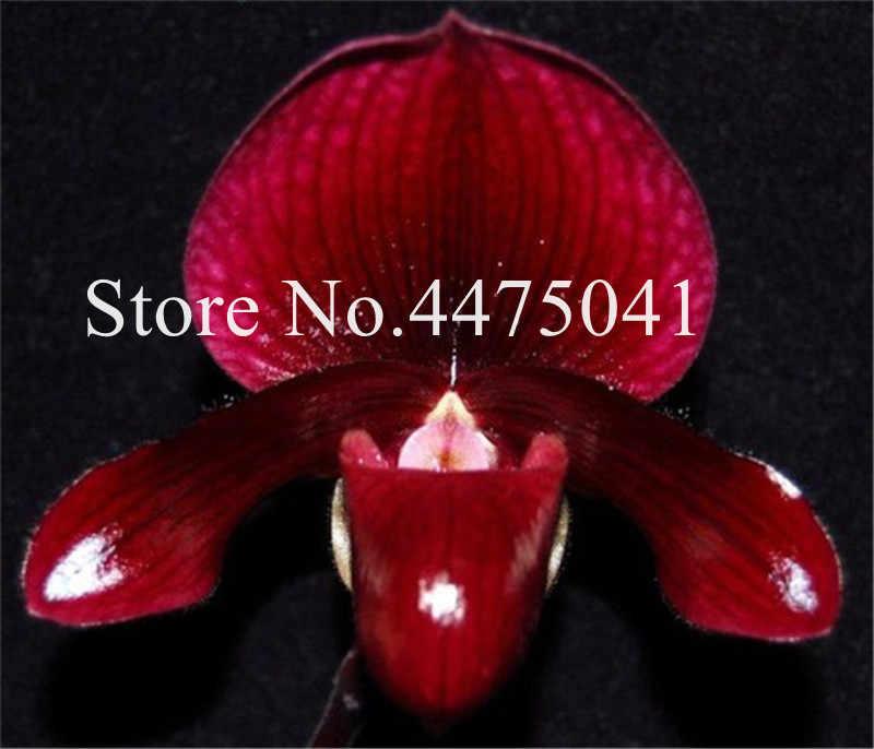 200 cái Nhiều Màu Cymbidium Phong Lan, Nhật Bản Khỉ Mặt Bonsai Khác Nhau Phong Lan Loài Cho Khu Vườn Và Vườn Home Hot Bán