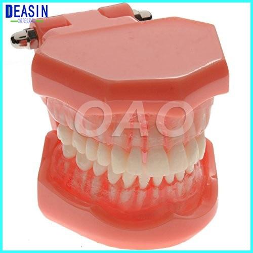 Dental standard model forTeeth Teaching Type Removable Teeth dentist student learning model soarday dental standard model tooth removable soft gums dental teaching dentist communication model