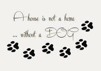 DCTAL Pet Shop Vinil Duvar Çıkartması Köpek Alıntı Paw Prints Pet Ev Mural Duvar Sticker Pet Salon Odası Ev Dekorasyon