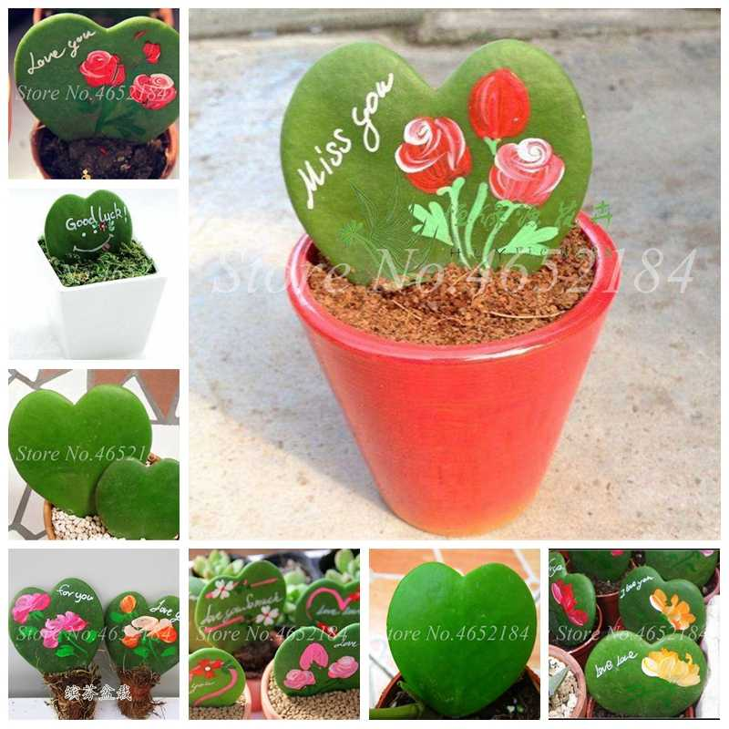 100 Pcs/Tas Langka Hoya Kerrii Tanaman Bonsai Outdoor & Indoor Perennial Novel Pot Succulent Planta untuk Home Garden Pot Bunga