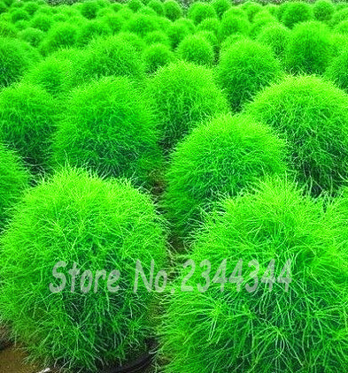 Online Get Cheap Flowering Ground Covers