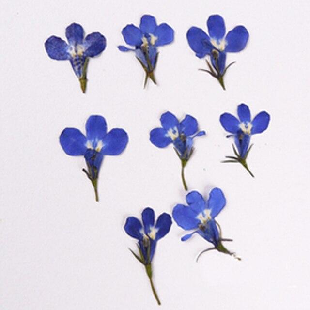 Лобелия сушат засушенный цветок 1 пакета(ов)/120 шт. DIY Handmande цветочный для карт/ногтей украшения оптом Бесплатная доставка