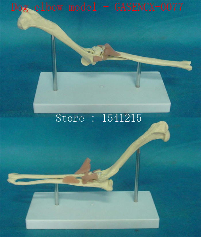 Animal Anatomy Model Veterinary specimens Dog skull bone Skeleton model Animal bones Dog elbow model - GASENCX-0077 pet model dog specimen animal anatomy model veterinary teaching aids teaching model dog anatomical model gasencx 0072