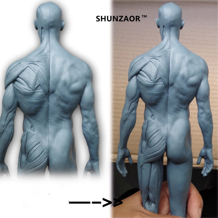 SHUNZAOR Anatomy Stop118 human