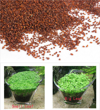Aquarium Plant Seed 1