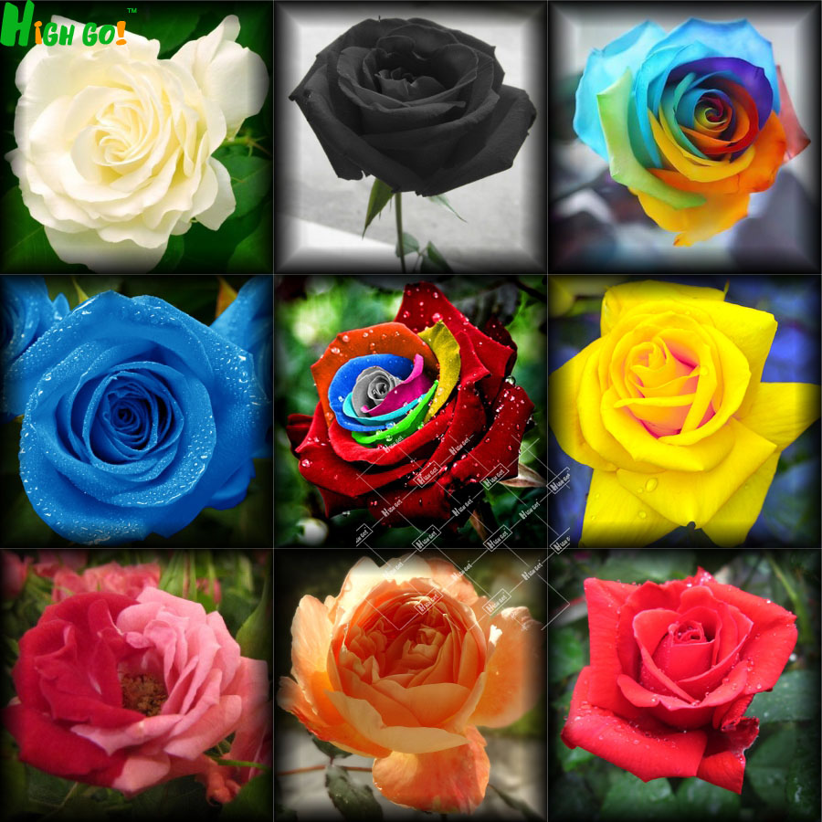 flower pots planters, 9 packs 9 colors Chinese rose seeds flowers ...