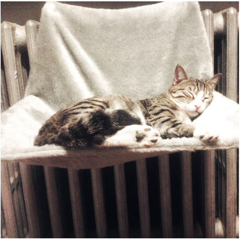 cat hammock radiator Cat Hammock Radiator Bed with Cozy Sheepskin Effect Cover HTB1qy5gOVXXXXaCXFXXq6xXFXXXd