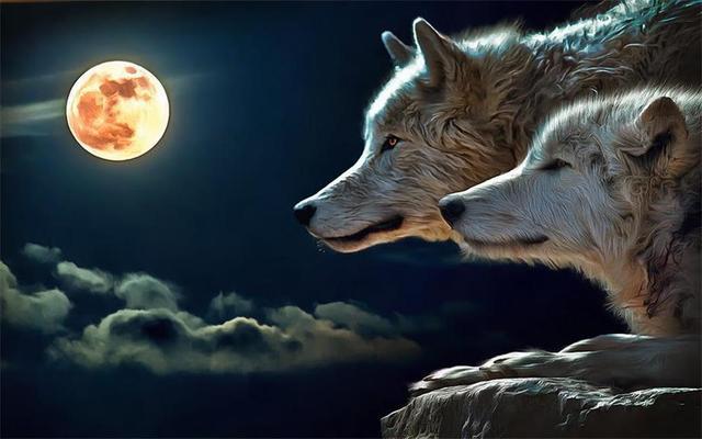 Custom 3D Photo Wallpaper Room Mural Wolf In The Night