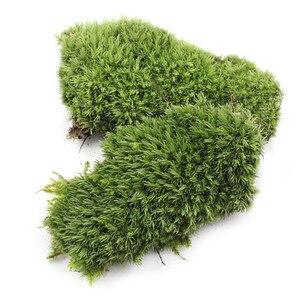 2 шт. Зеленый Искусственный мох коралловый камень модель трава растение в горшке Мини Пейзаж Сказочный Сад аквариумное украшение