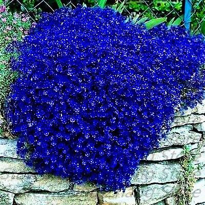 эухарис цветок с доставкой из России