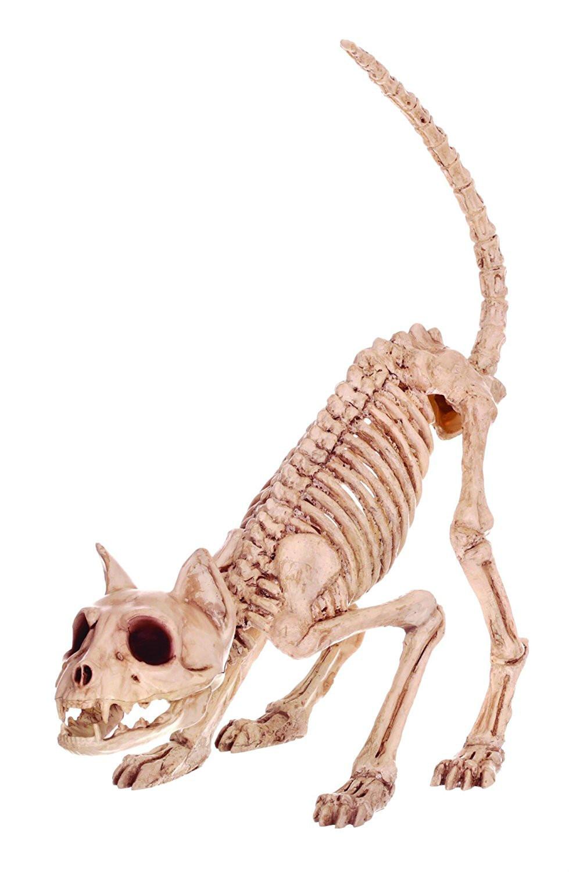 Fantástico Gato Trasera Anatomía De La Pierna Colección de Imágenes ...