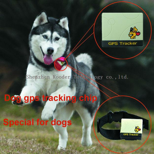 Chip In Dog Goldenacresdogs