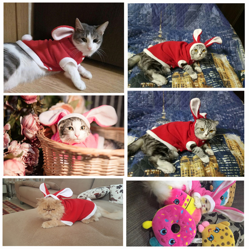Warm Thickened Cat Easter Costumes Rabbit suit Free clothes windproof Pet Product Cute Bunny suit For